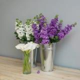 Beautifull花卉背景 Mathiola白色紫色花春天、复活节或者从事园艺的概念 在温暖的花 库存图片
