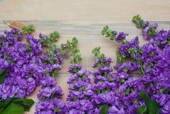 Beautifull花卉背景 Mathiola白色紫色花春天、复活节或者从事园艺的概念 平的位置 复制空间 花 库存照片