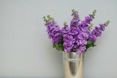 Beautifull花卉背景 Mathiola紫色花春天、复活节或者从事园艺的概念 灰色墙壁 在温暖的花 免版税图库摄影