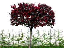 beautifull ρόδινο δέντρο Στοκ Εικόνα