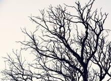 Beautifull树 免版税图库摄影