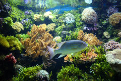 Beautifull aquarium Royalty Free Stock Photo