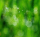 Beautifull blur green background Royalty Free Stock Images