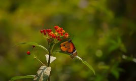 a beautifull butterfly stock photo