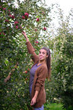 Beautifull casual girl picking apple in an orchard Stock Photos