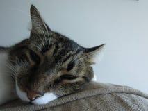 Beautifull cat stock image
