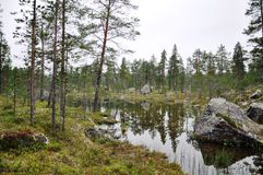 Beautifull Finland. Awesome hicking trail in Finland nationapark. Verry close to the highway. A great place to put your tent Royalty Free Stock Photos