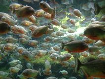 Beautifull fishes. In the blue planet cph stock photo