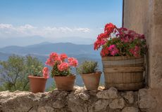 The beautifull Flower pots. Many flowers that decorate a beautifull landscape and a blue skyn Stock Image