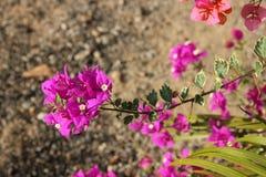 Beautifull flower. Flower in snake farm Pattaya Thailand Stock Photography