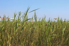 Beautifull grass behind the beach full of people Royalty Free Stock Photography