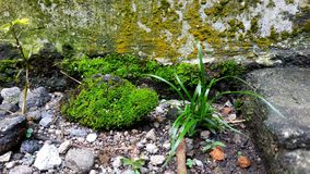 Green moss and wild plant stock image
