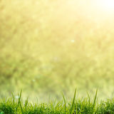 Beautifull green nature background Royalty Free Stock Image