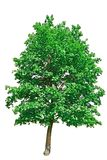 Beautifull green tree Stock Photography