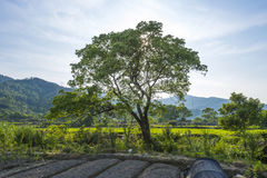 Beautifull green tree. In the country Stock Images