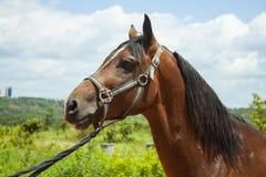 Beautifull Horse Royalty Free Stock Photos