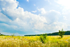 Beautifull landscape Royalty Free Stock Photo