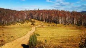 Beautifull nature Stock Images