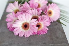 Pink Flowers on white background Stock Photos