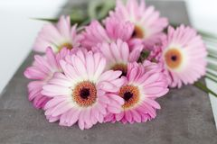 Pink Flowers on white background Stock Photo