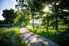 Beautifull rural road. Road flanked by trees in the summertime Royalty Free Stock Image