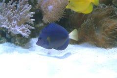 Beautifull sea marine aquarium royalty free stock photos