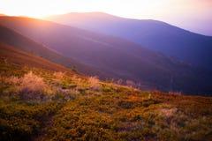 Beautifull summer evening mountain landscape. Carpathian, Ukraine. Soft sunlight colors everything in pink Stock Image