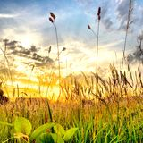 Beautifull sunset over a field Royalty Free Stock Photos