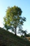 A beautifull tree on mountain royalty free stock photos