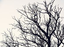 Beautifull tree. Nature is very beautiful and helpful for us royalty free stock photography