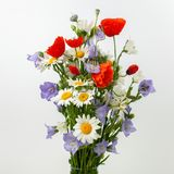 Wild flower posy over white background. Beautifull wild flower bouquet over white background royalty free stock images
