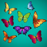 Beautifully. Butterflies; Amiral butterfly; Speckled Wood butterfly ; White butterfly; Wall brown butterfly Royalty Free Stock Photo