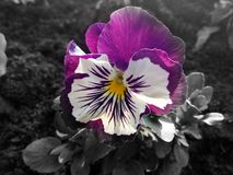 Beautifully colored flowers in national garden stock photo