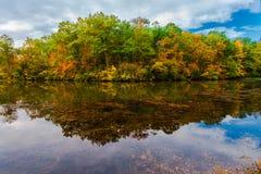 Reflecting Trees Royalty Free Stock Image