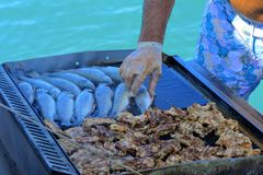Beautifully cooked fried pieces of quail meat and whole trout fish on an electric grill on a yacht in the open sea. The concept of. Fast cooking delicious and royalty free stock image