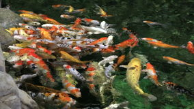 Beautifully decorated artificial pond with Koi stock video