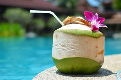 Beautifully decorated coconut near the swimming pool Royalty Free Stock Photo