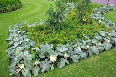 Beautifully decorated flowerbed of vegetables in a public park in London stock photos