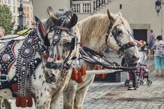 Beautifully decorated horses carrying tourists stock photos