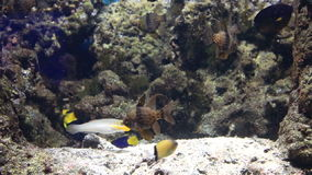 Beautifully decorated Marine Aquarium stock footage video stock video footage