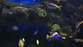 Beautifully decorated saltwater aquarium with fish stock video