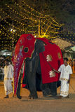 A beautifully dressed elephant wearing a red cloak parades through the arena at the Kataragama Festival in Sri Lanka. Royalty Free Stock Photos