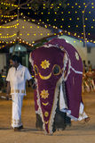 A beautifully dressed young elephant parades through the arena at the Kataragama Festival in Sri Lanka. Royalty Free Stock Photography