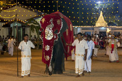 A beautifully dressed young elephant parades through the arena at the Kataragama Festival in Sri Lanka. Stock Photos