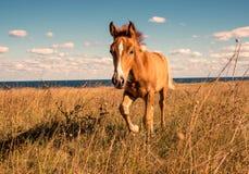Beautifully groomed horses stock photos