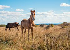 Beautifully young horses royalty free stock images