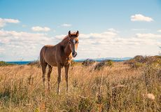 Beautifully young horses stock photography