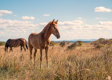 Beautifully young horses royalty free stock photo