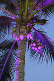 Beautifully highlighted palm tree Stock Image