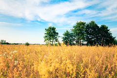 Beautifully landscape Royalty Free Stock Images